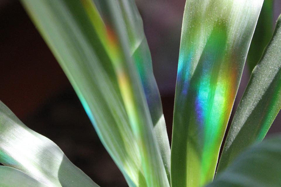 Plant, Sheet, Nature, Rainbow, Background, Krupnyj Plan