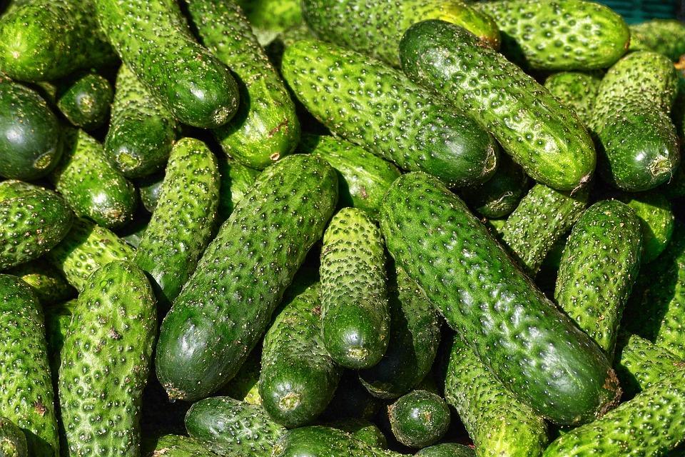 Cucumbers, Kukumer, Garden Cucumber, Choose, Cucumis