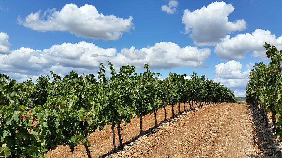 Vineyard, Fields, La Rioja, Clouds