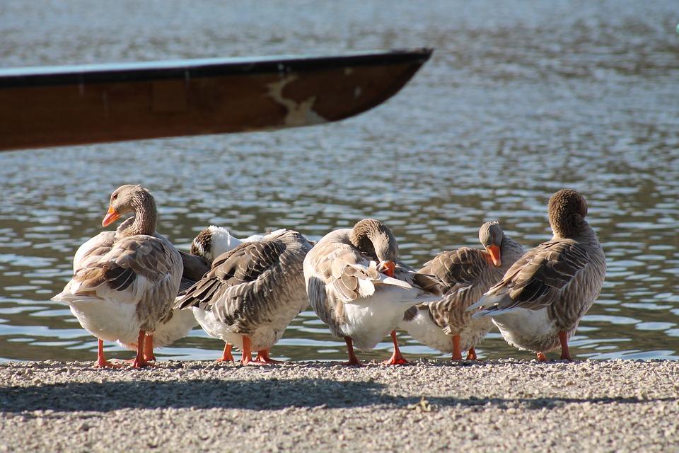Sail, Ducks, Lacquer
