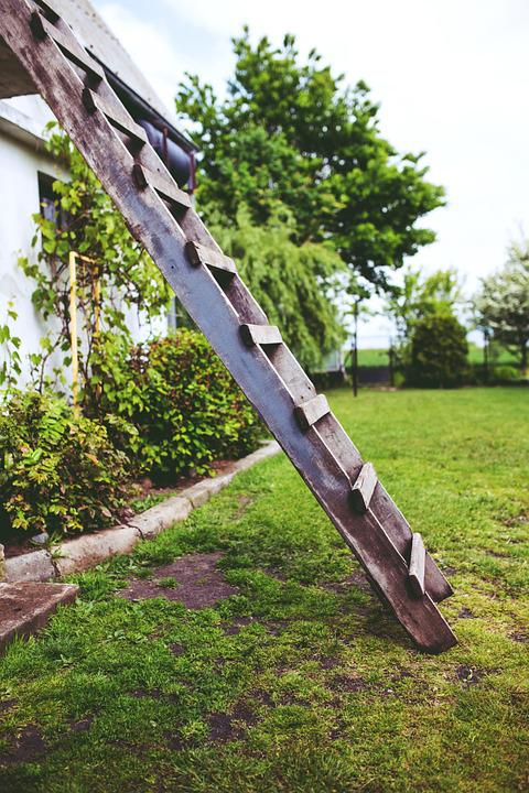 Wooden, Wood, Ladder, Garden, Green