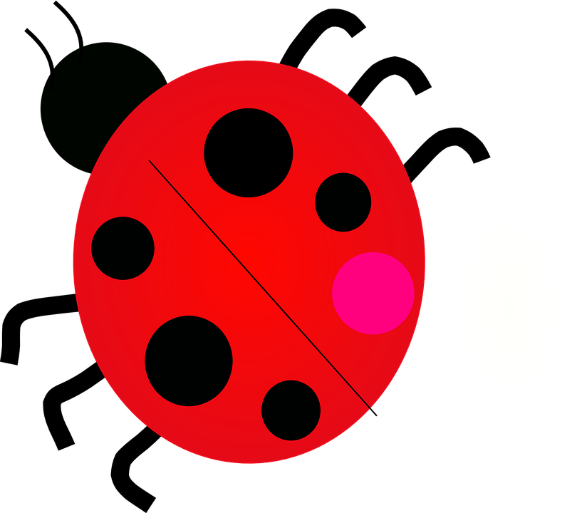 Junebug, Ladybug, Ladybird, Beetle, Bug, June Bug, Red
