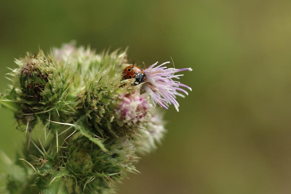 Flower, Ladybug, Insect, Beetle, Bloom, Nature