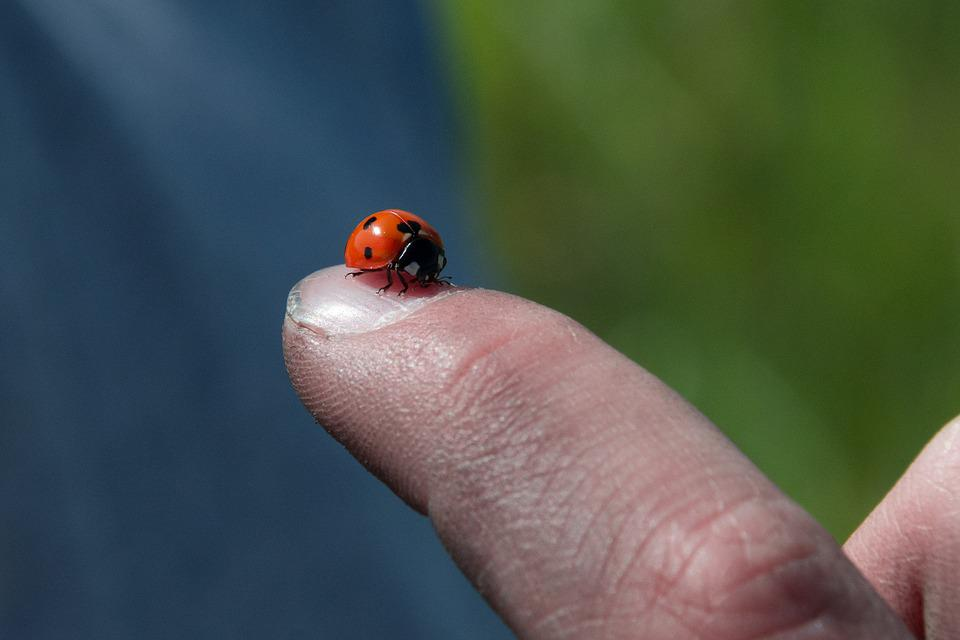 Insect, Outdoors, Nature, Ladybug, Biology, Summer