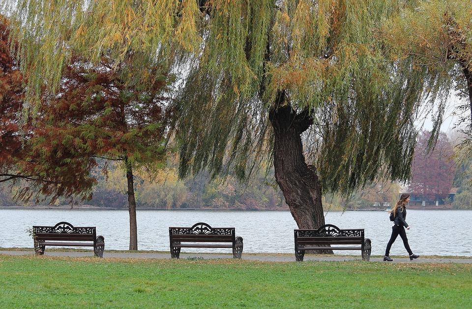 Lake, Autumn, Landscape, Trees, Grass, Passer, Benches