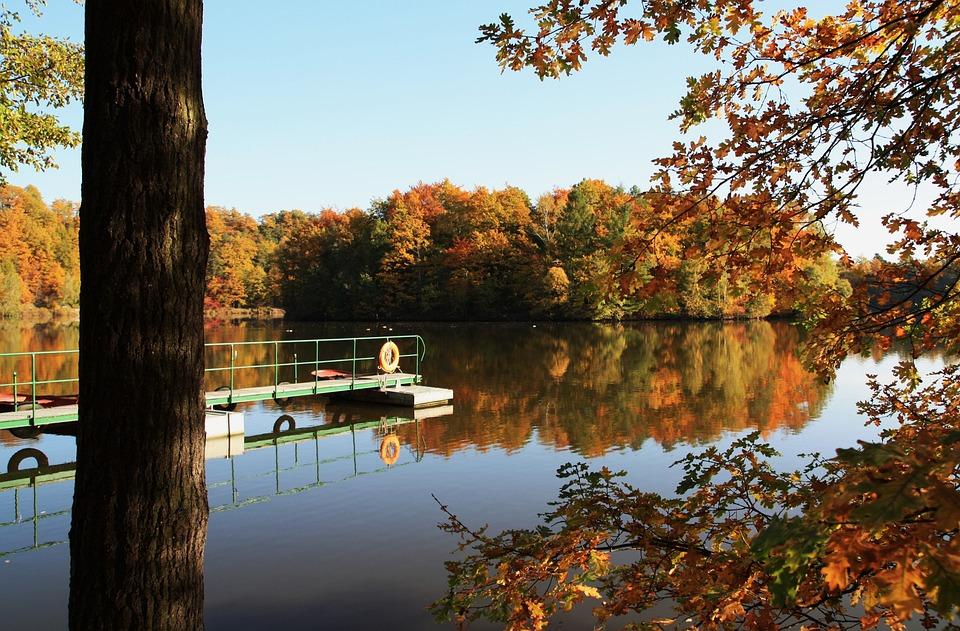 Autumn, Leaves, Lake, Web, Water, Nature, Fall Foliage