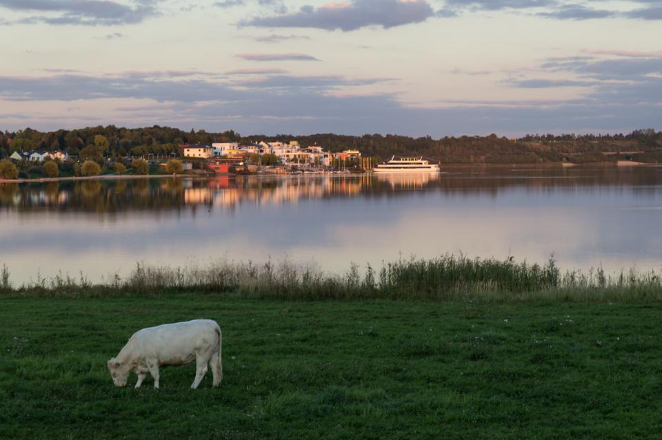 Cow, Pasture, Graze, Bank, Lake, Recovery, Rest, Ship