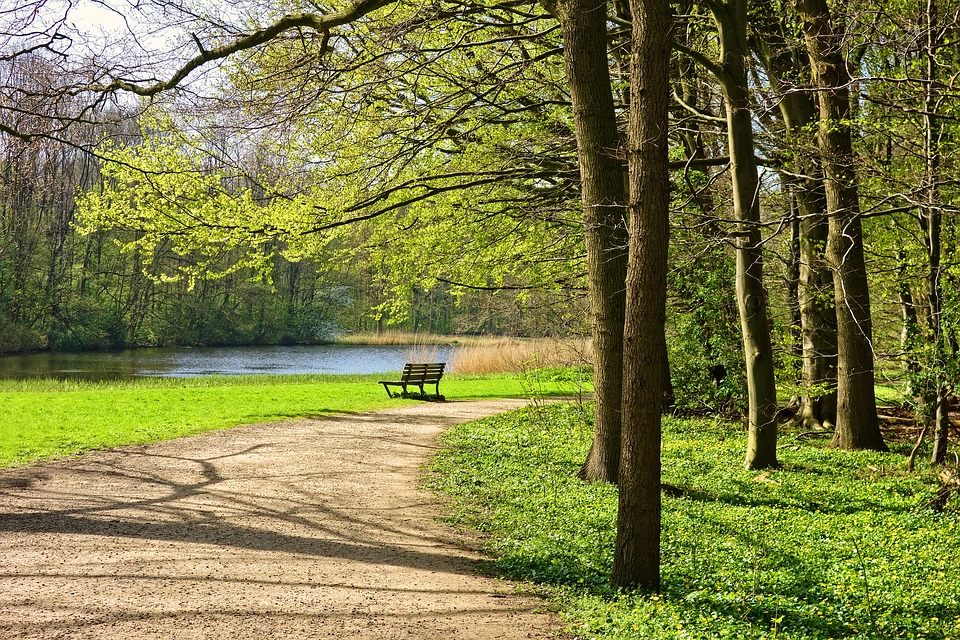 Park, Path, Bench, Trees, Grass, Lake, Landscape