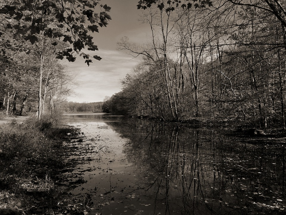 Lake, Water, Black And White, Trees