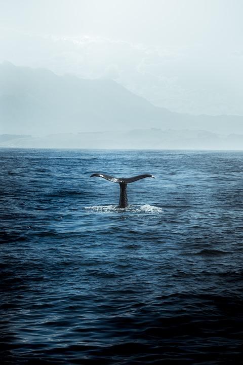 Nature, Lake, Mountain, Tree, Whale, Ocean, Blu, Animal