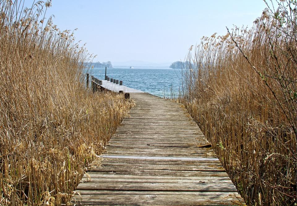 Web, Reed, Nature, Water, Boardwalk, Waters, Lake, Bank