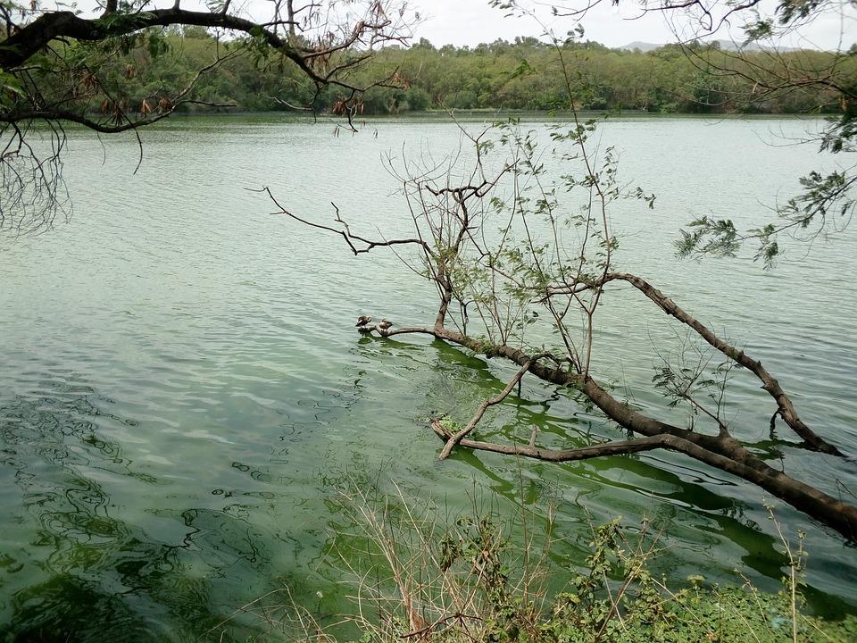 Branch, Lake, Water