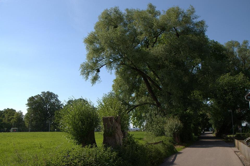 Bregenz, Lake Constance, Green, Tree, Meadow, Nature