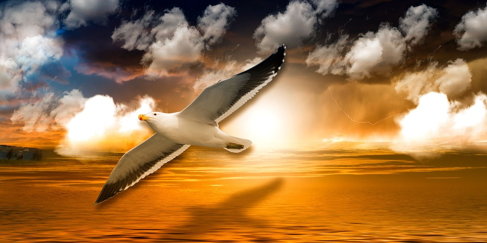 Seagull, Clouds, Sea, Nature, Lake, Flight, Fly, Sun