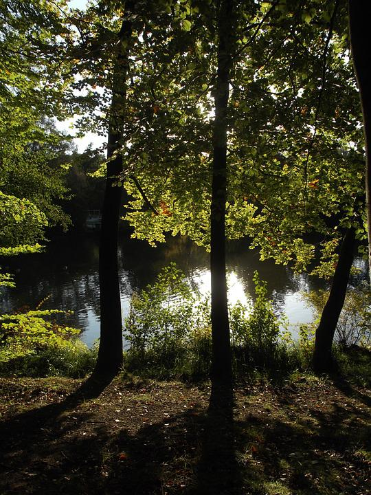 Lake, Nature, Forest, Trees