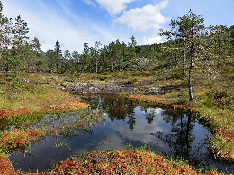 Water, Pond, Pools, Lake, Peaceful, Mirroring, Heide