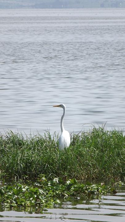 Heron, Lake, Dam The Meadow