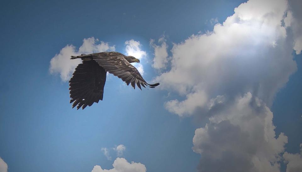 White Tailed Eagle, Kummerower, Lake