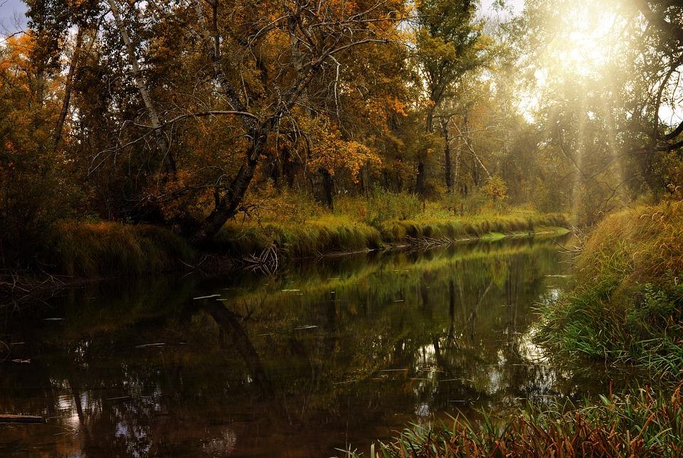 Forest, Nature, Landscape, Fall, River, Lake, Dark