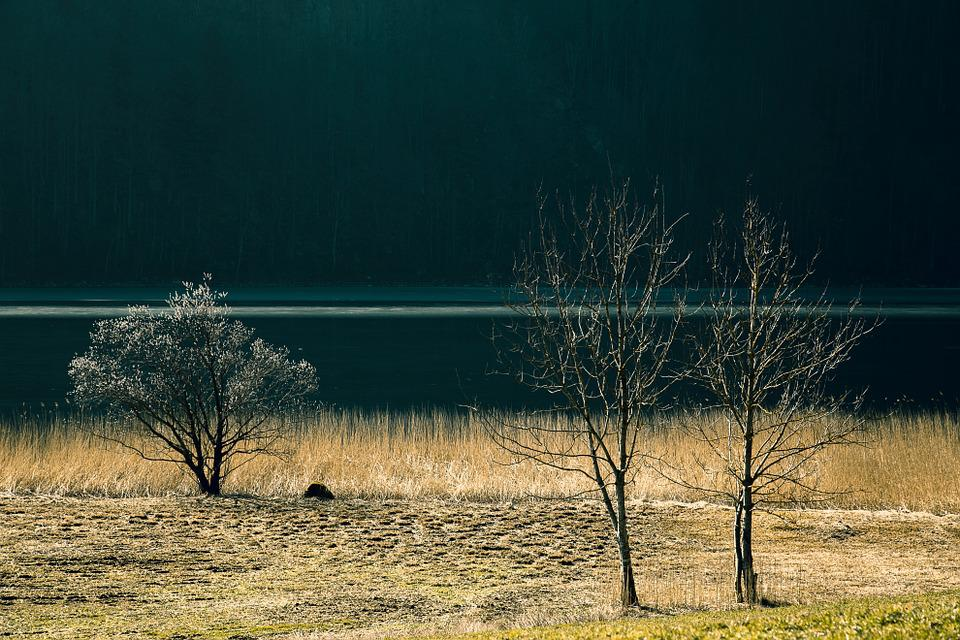 Lake, Landscape, Nature, Water, Bank, Tree, Forest