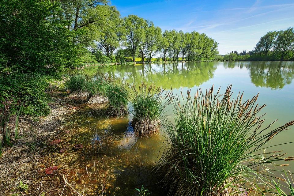 Tree, Nature, Waters, Reflection, Lake, Pond, Landscape