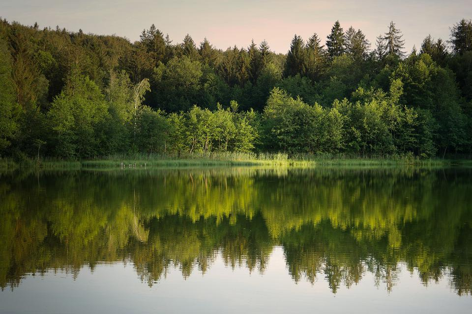 Forest, Lake, Mirroring, Water, Landscape, Trees, River