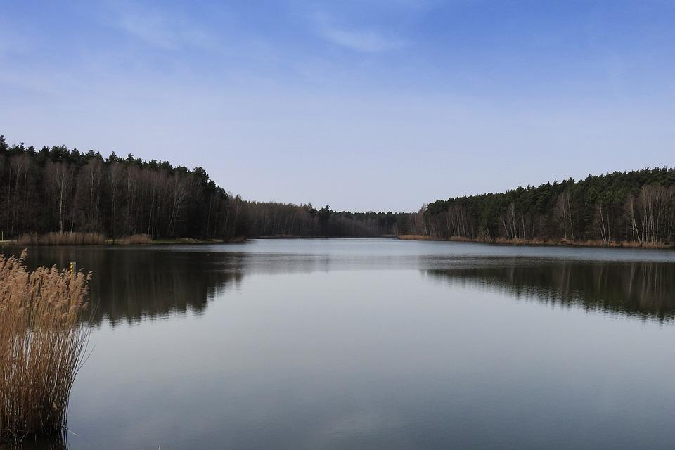 Lake, Trees, Reflection, Mirroring, Mirrored Trees