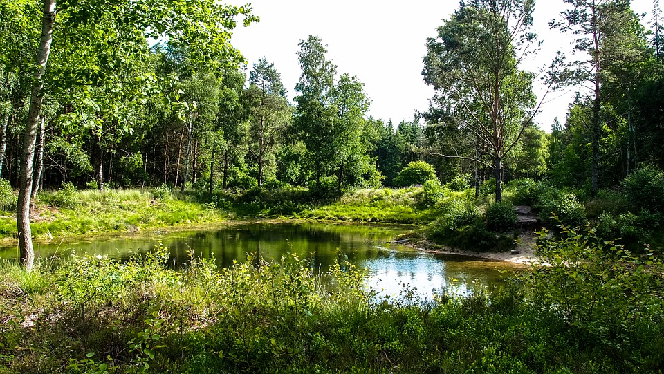 Waldsee, Lake, Forest, Water, Mirroring, Trees, Sky