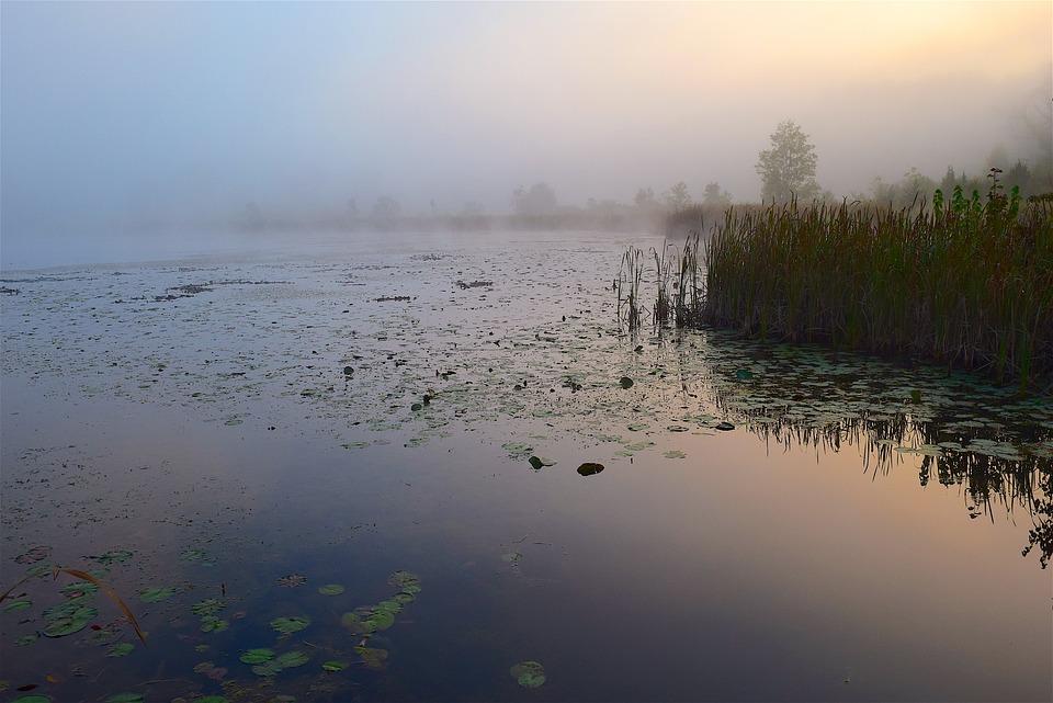 Lake, Mist, Morning, Sunrise, Water, Nature, Landscape