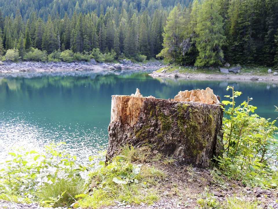 Tree Stump, Log, Sawed Off, Lake, Mountain, Mountains