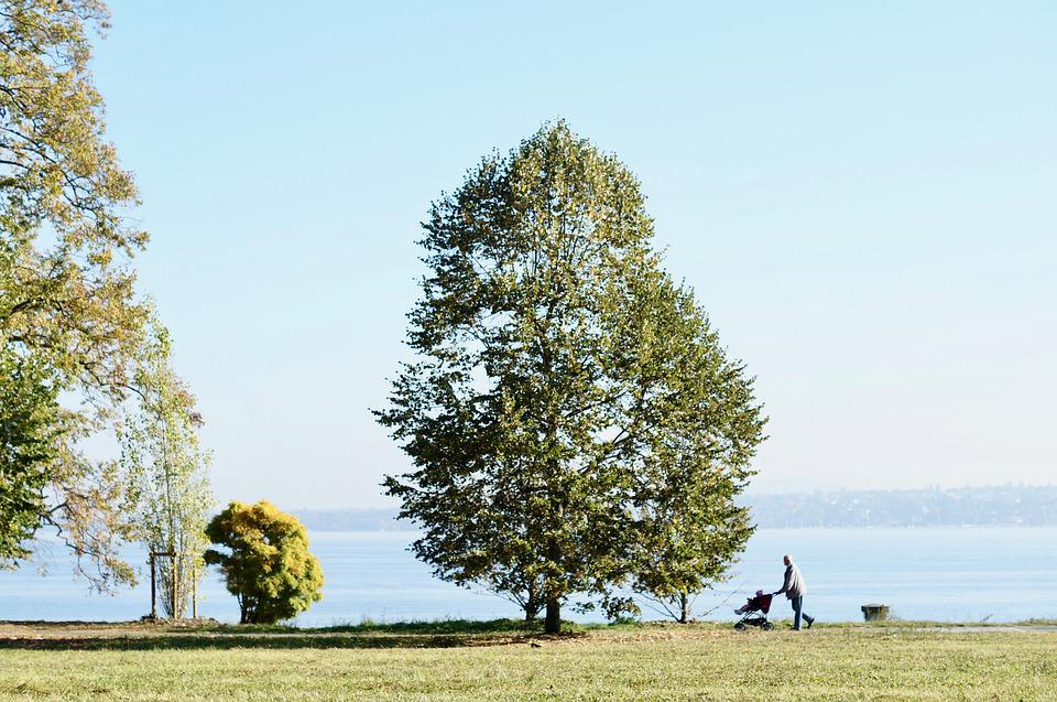 Landscape, Lake, Mr, Old, Old Age, Removal, Lake Geneva