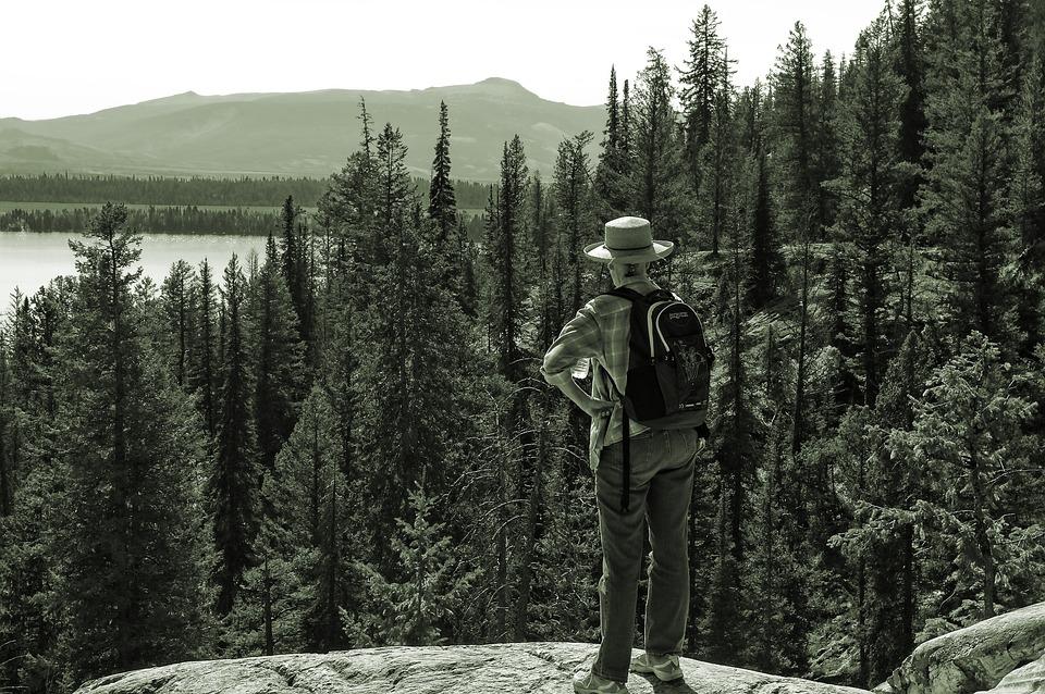 Overlooking Jenny Lake, Lake, Mountains, Hike, Nature