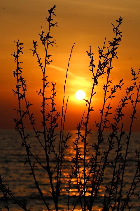 Sunset, Waterside, Lake, Nature