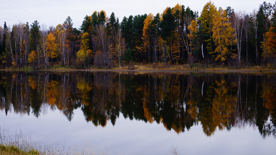 Nature, Autumn, Lake, Trees, Landscape, Reflection