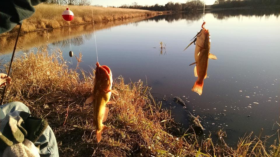 Water, Nature, Outdoors, Lake, Fish