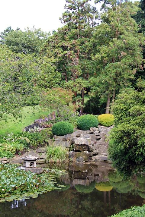 Park, Pond, Lake, Japan, Tree, Plant, Green