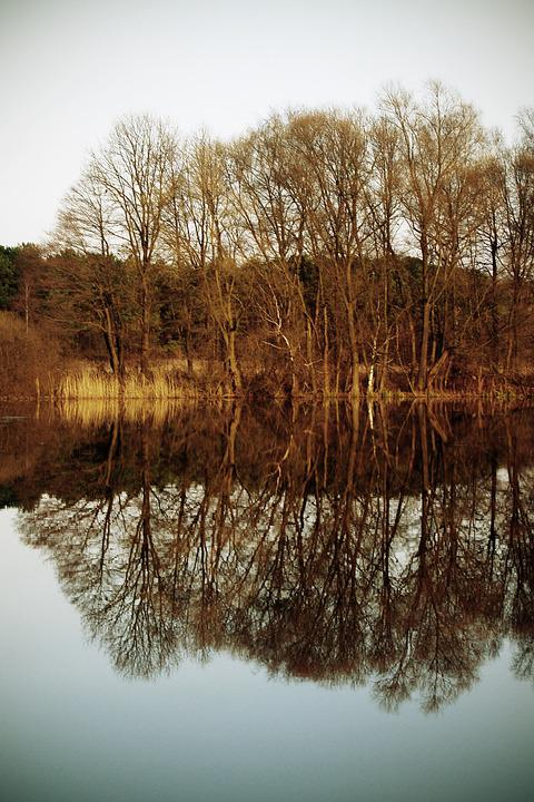 Tree, Autumn, Pond, Lake, Reflection, Forest, Nature