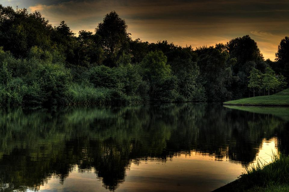 Forest, Shore, Lake, Pond, Quiet, Tranquil, Reflection