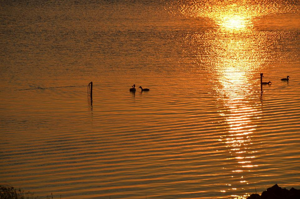 Waterfowl, Ducks, Sea, Lake, Sunset, Evening, Twilight