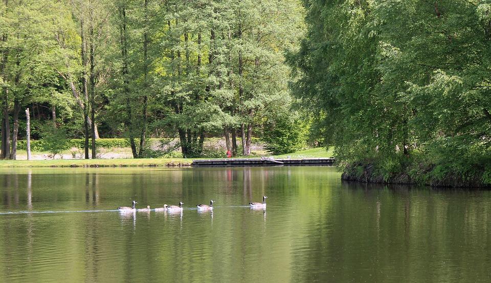 Lake, Nature, Landscape, Rest, Natural, Water, Silent