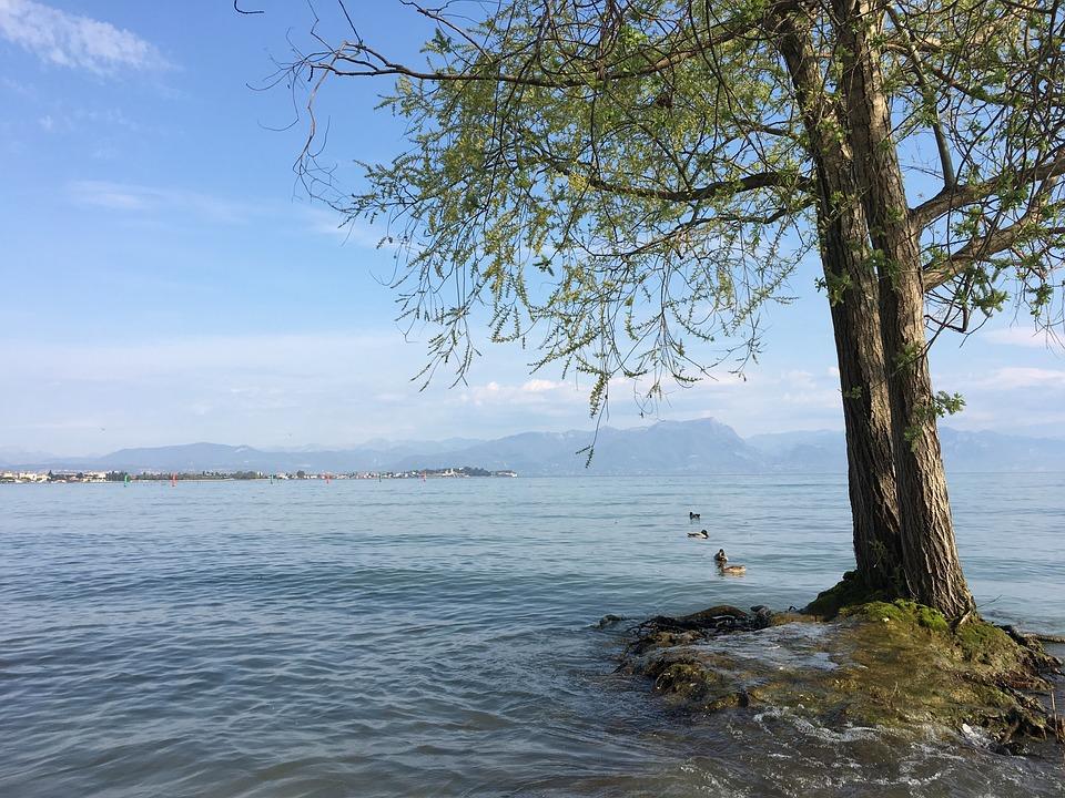 Tree, Lake, Sirmione, Sky