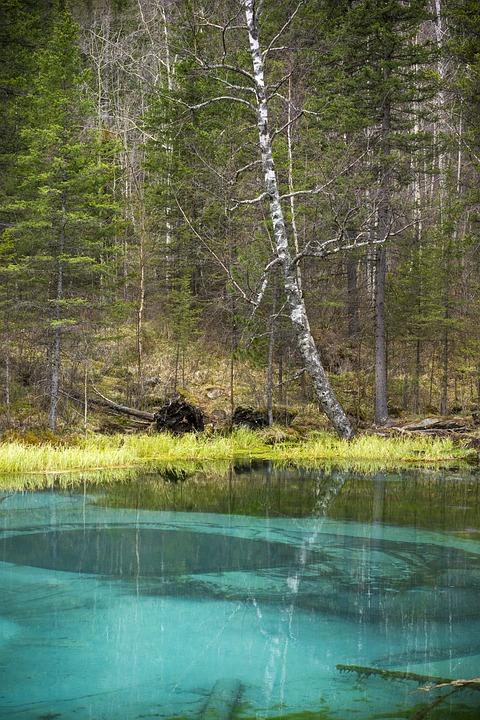 Nature, Lake, Spring Lake, Altai, Russia