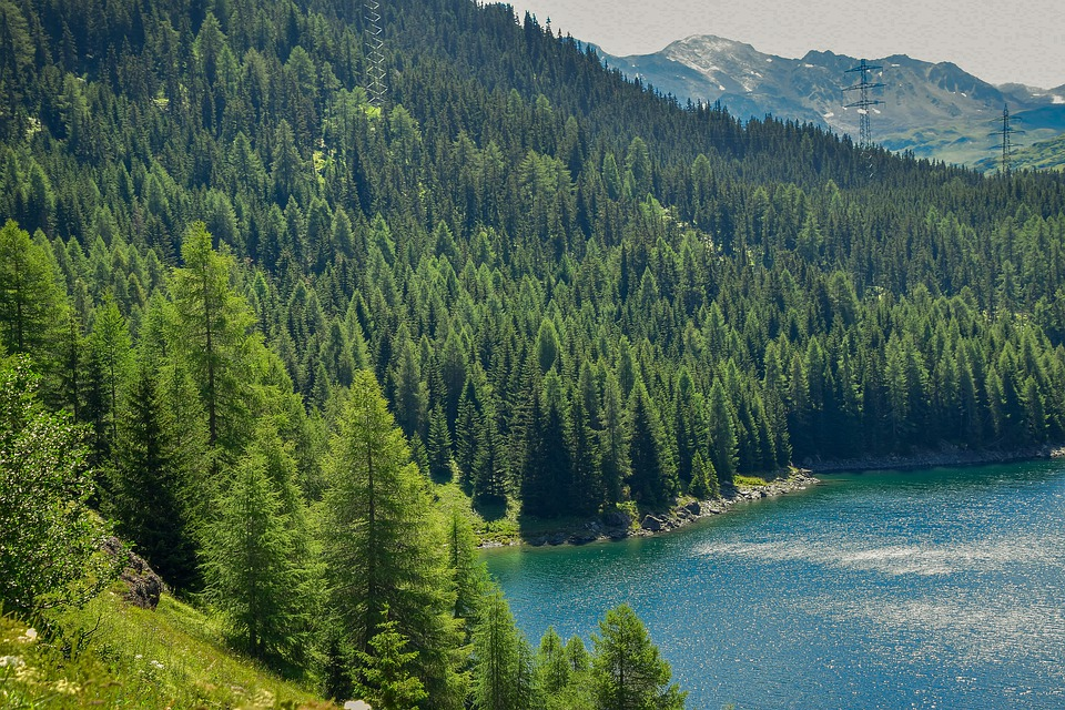 Trees, Lake, Swiss, Nature, Forest, Summer, Mountains