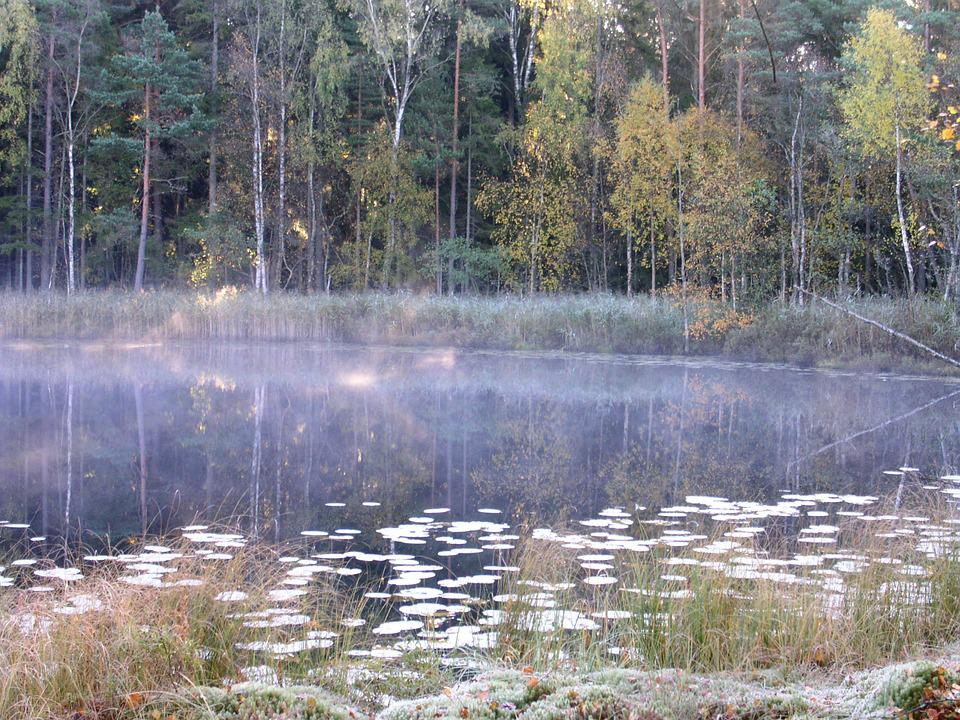 Tarn, Lake, Mist, Autumn, Atmosphere, Morning
