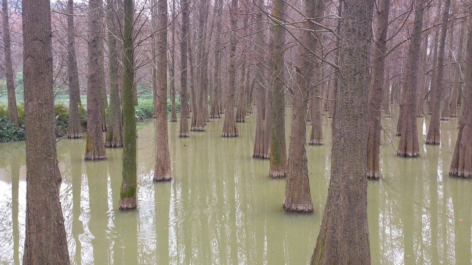 Water Fir, Lake, The Outskirts