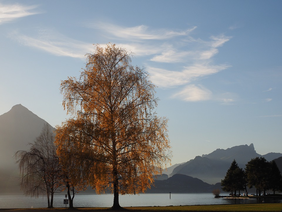 Interlaken, Lake, Lake Thun, Bank, Promenade, Tree