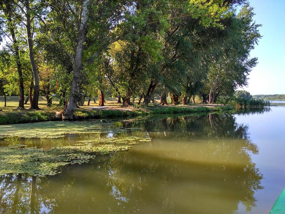 Hungary, Lake Tisza, Swamp, Lake, Nature, Water, Reed
