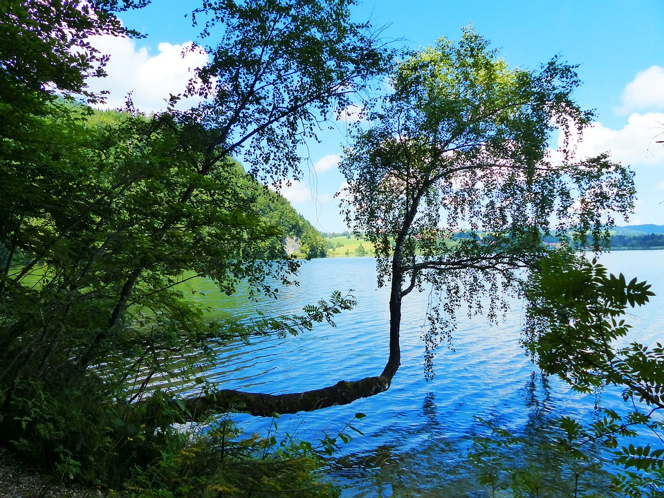 Lake Weissensee, Lake, Waters, Uferweg, Tree Formation