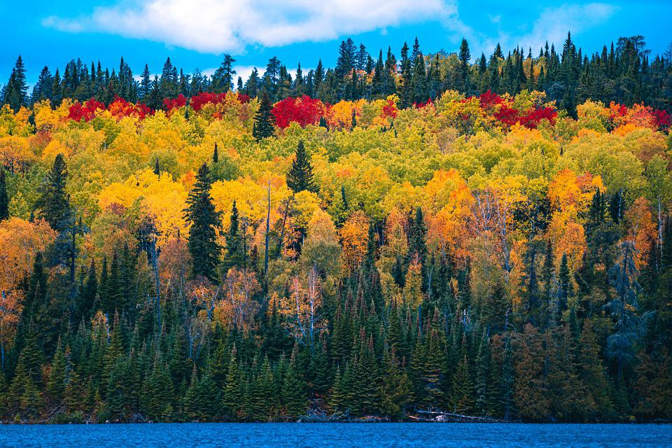 Forest, Woods, Lake, Trees, Leaves, Autumn, Colorful