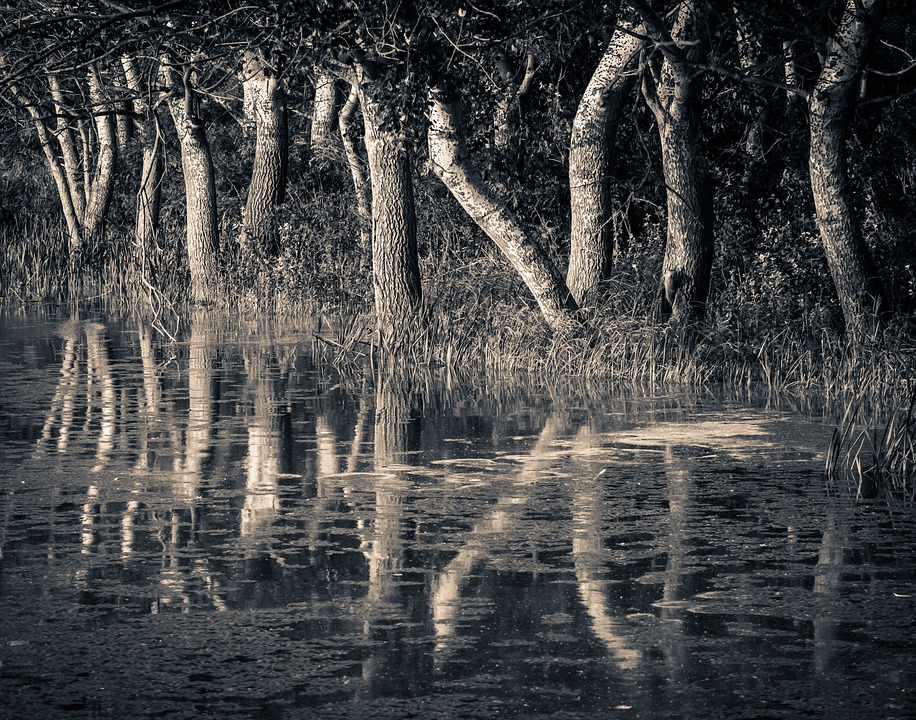 Trees, Reflection, Nature, Water, Lake, Landscape